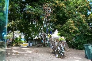 Hangover Tree
